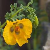 Gul blomma royaltyfri bild