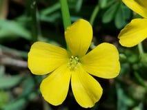 Gul blomma arkivbild