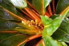Gul blomma, apelsinsidor Royaltyfri Bild