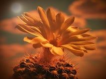 Gul blomma av kaktuns med himlen som en bakgrund Arkivfoton