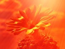 Gul blomma av kaktuns med himlen som en bakgrund Royaltyfri Fotografi