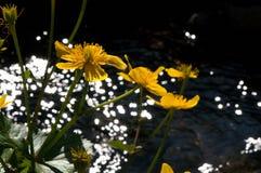 Gul blomma av tr?sket - Slovakien royaltyfri fotografi