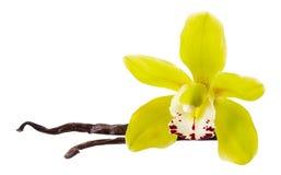Gul blomma för vanilj och 2 pinnar eller fröskida som isoleras på vit bakgrund som packande designbeståndsdel Naturlig aromkrydda arkivfoton