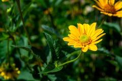 Gul blomma, gräsplan, bakgrund royaltyfri fotografi