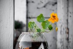 Gul blomma i en glass vase Arkivbilder