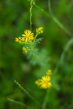 Gul blomma i grönt gräs Begrepp av den bräckliga naturen Arkivbilder
