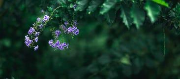 Gul blomma i mörk signalbakgrund för natur royaltyfri foto