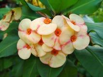 Gul blomma i trädgård Royaltyfri Fotografi