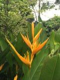 Gul blomma i trädgård Royaltyfri Bild