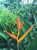 Gul blomma i trädgård Arkivfoto