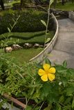 Gul blomma i trädgård Arkivfoton