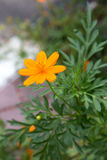Gul blomma i trädgårds- lodlinje Arkivbilder