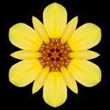 Gul blomma Mandala Kaleidoscope Isolated på svart royaltyfria bilder