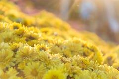 Gul blomma med väderkorn Royaltyfri Bild