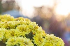 Gul blomma med väderkorn Arkivfoto
