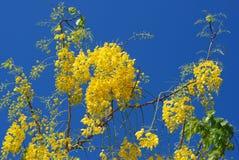 Gul blomma mot himlen arkivfoto