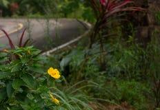Gul blomma och bi på wayside Arkivfoton
