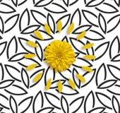 Gul blomma och kronblad på den svarta bakgrunden för vit blomma Lekmanna- lägenhet Arkivfoton