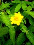 Gul blomma på en grön vegetation Arkivbild