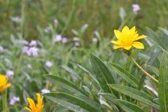 Gul blomma på rätten Arkivfoton