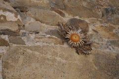 Gul blomma på stenväggen Royaltyfri Foto