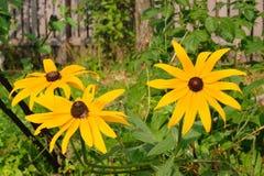 Gul blomma tre i en trädgård Fotografering för Bildbyråer