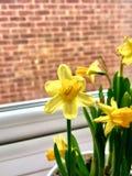 Gul blomma - vårtid Arkivfoto