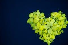 Gul blommahjärta för nära övre natur på svart bakgrundswallpepertextur arkivbild
