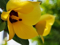 Gul blommamakro royaltyfria foton