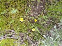 Gul blommas gr?sr?kning royaltyfria foton