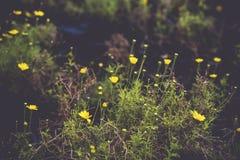 Gul blommatappning Royaltyfria Bilder