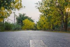 Gul blomningväg Royaltyfri Foto