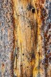 Gul brun avriven skadad träbakgrundstextur arkivbild