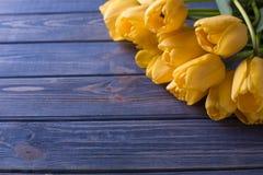 Gul bukett för blommatulpan på blå backgraund Royaltyfri Fotografi