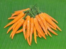 Gul chili för peruan på bladet royaltyfria bilder