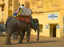 gul elefantfortindia jaipur ritt Fotografering för Bildbyråer