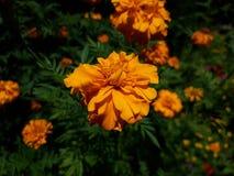 Gul eller orange blomma? fotografering för bildbyråer
