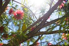 Gul fågel Royaltyfria Foton