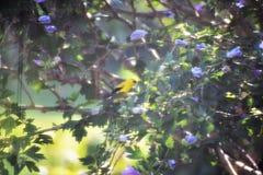 Gul fågel på filial Arkivfoton