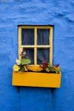gul fönsterblommaask på blå vägg 002 Royaltyfria Foton
