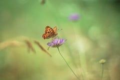 Gul fjäril på lilablomman - monark arkivfoto
