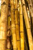 Gul gammal bambuskog - closup Arkivbild
