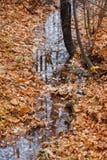 Gul höstlövverk och en pöl av klart vatten Arkivfoto