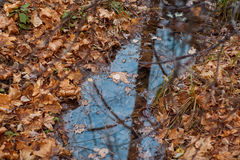 Gul höstlövverk och en pöl av klart vatten Arkivfoton