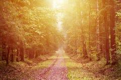 Gul höstskogbakgrund Royaltyfri Fotografi