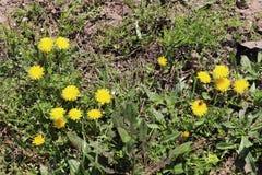 Gul h?rlig blomma i skogen royaltyfri foto
