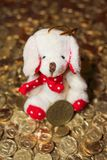 Gul hund på guld- mynt Royaltyfri Foto