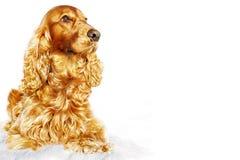 Gul hund på vit bakgrund Symbol av året Arkivfoton
