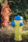 Gul hydrant Arkivbild