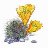 Gul kaktus Royaltyfri Foto